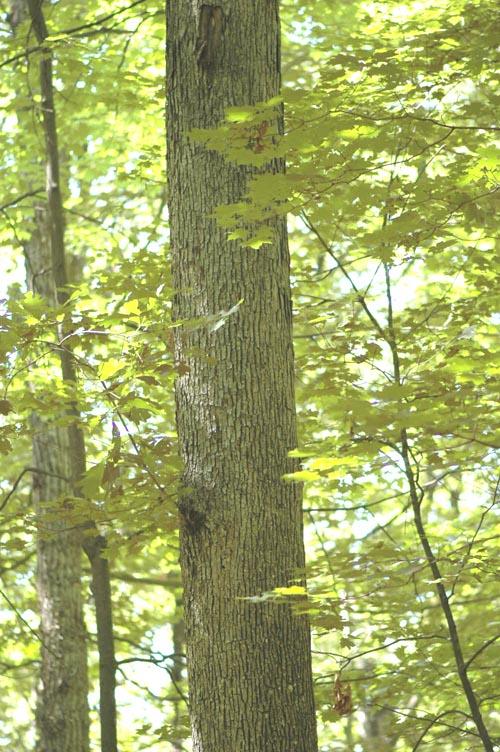 Field biology in southeastern ohio oaks of