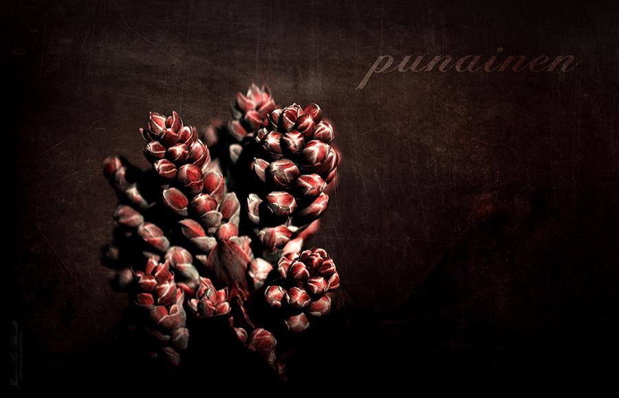 Bildbearbeitung Pflanze mit Textur