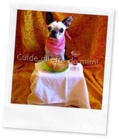cão esperando comida