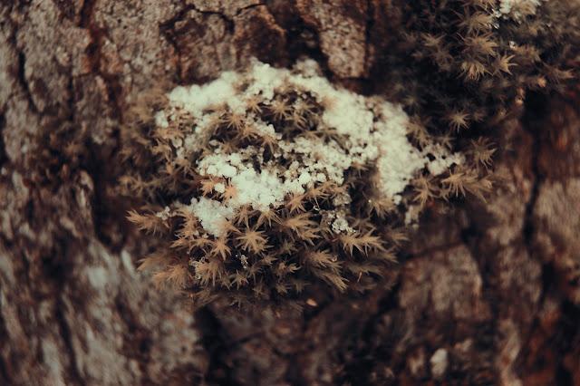 montagne-savoie-revard-ski-neige-ciel-beau-temps-photo-trou-arbre-bois-flocons