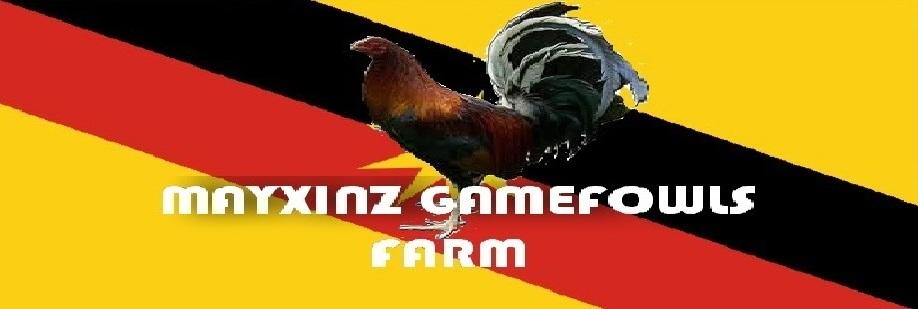 MAYXINZ GAMEFOWLS FARM