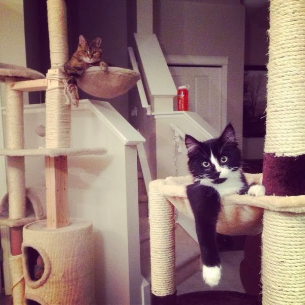 Funny cats - part 91 (40 pics + 10 gifs), two cats chill out on their cat tree