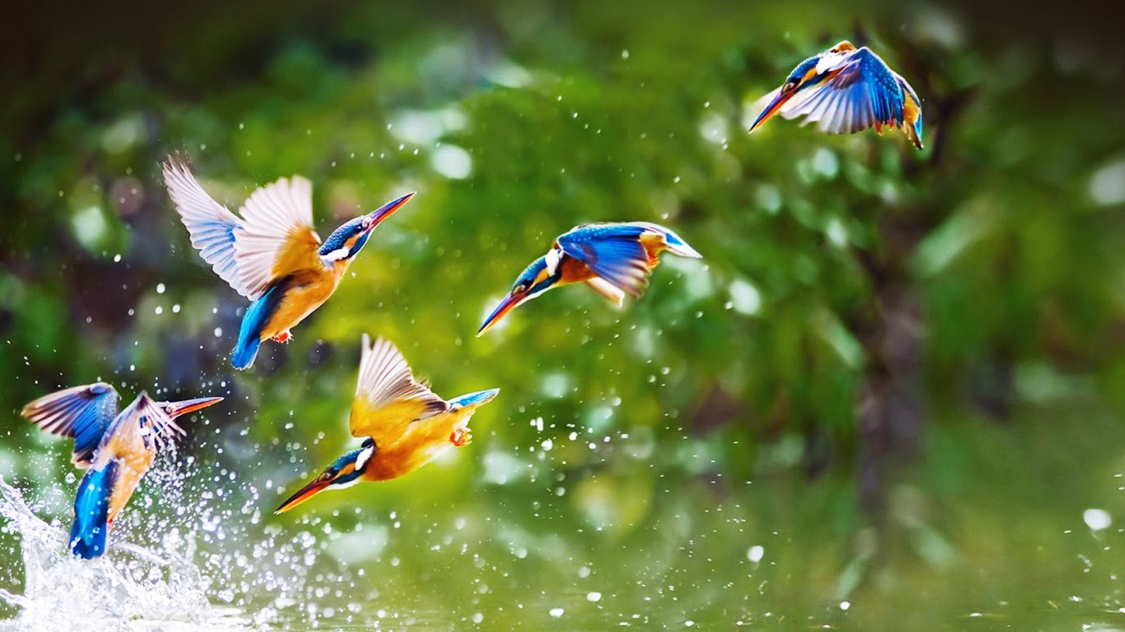 Beautiful bird flying wallpaper