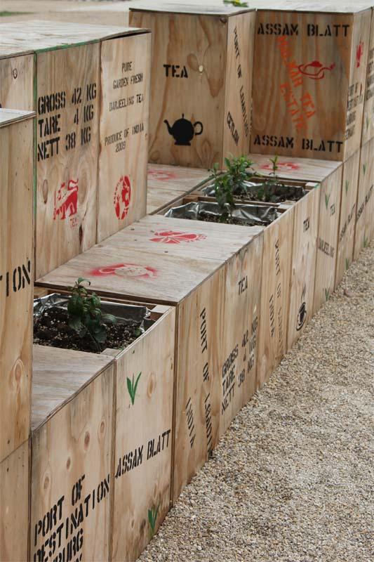 Pflanzen in Teekisten