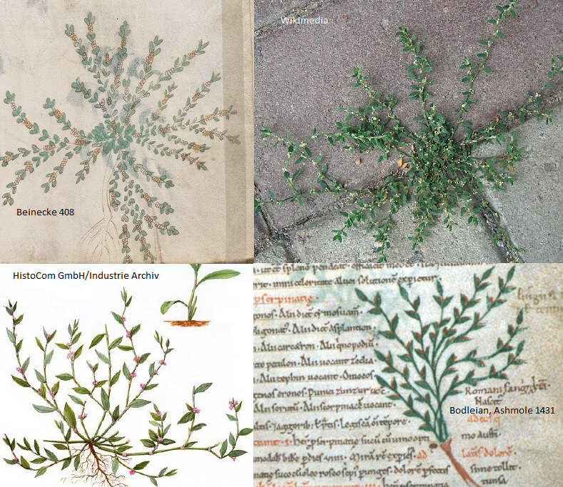 Voynich Manuscript Translation Voynich Manuscript F21r