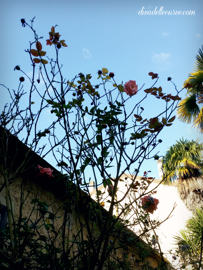 giardino mediterraneo con rose rosa