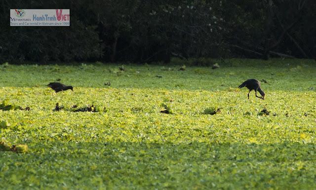 Rừng Tràm Trà Sư - Nơi đàn chim trở về