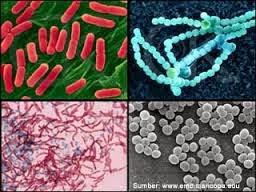 Macam-macam bakteri dan jenis-jenis bakteri