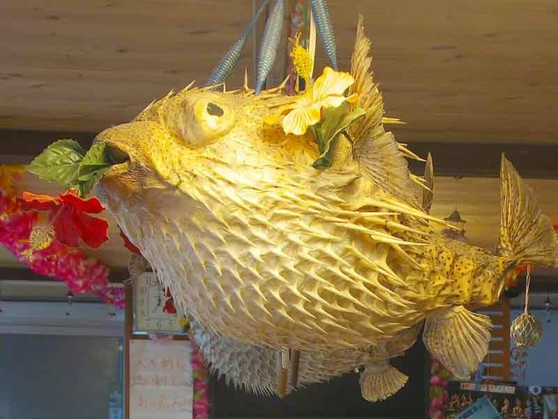 Tetraodontidae,pufferfish,blowfish,lamp