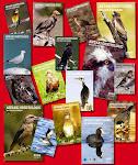 Anuaris Ornitològics (números 13 a 27)