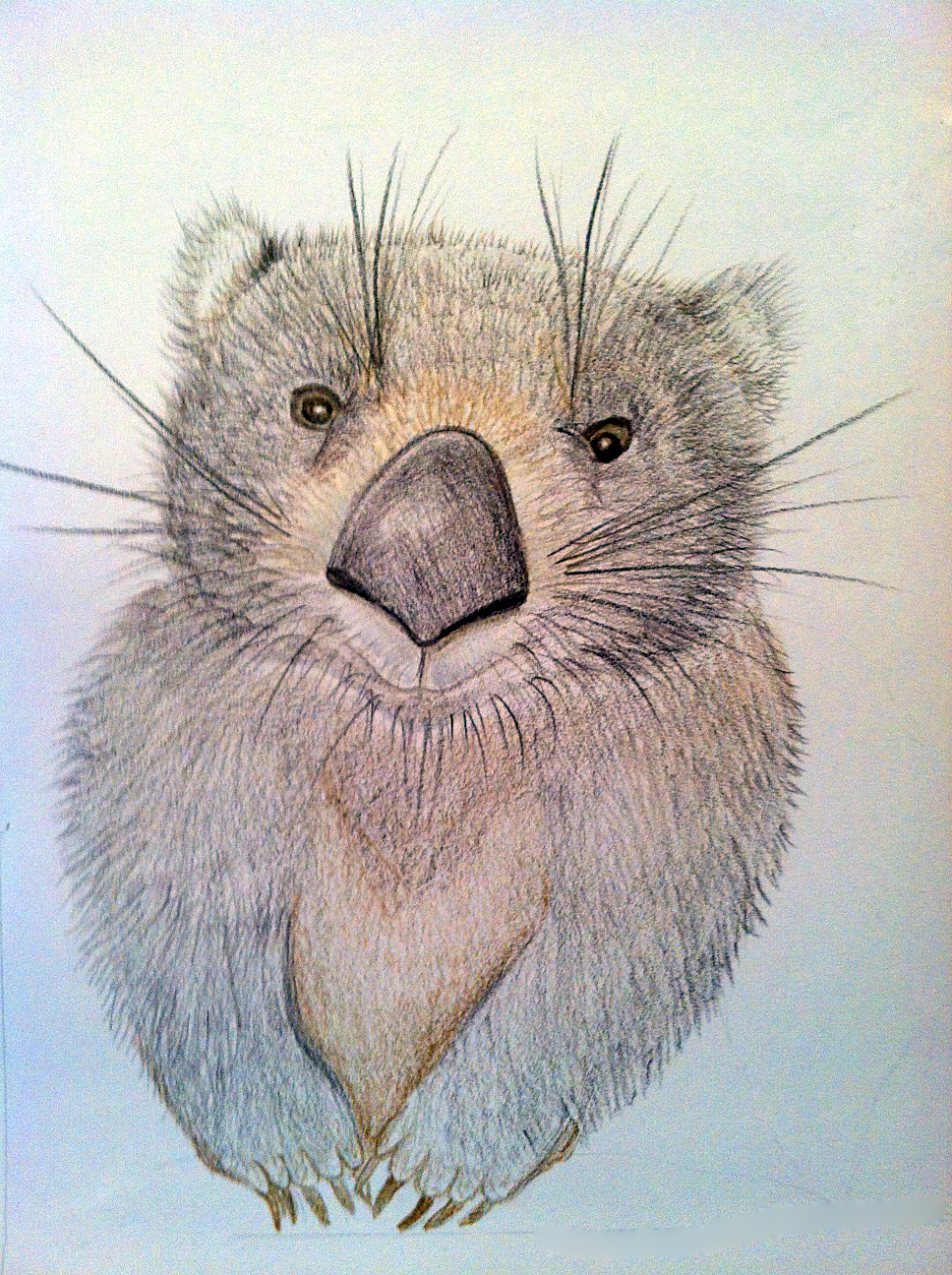 Wombat Drawing CMPimages: Wombat draw...