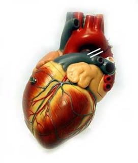 fakta kolesterol, olahraga untuk mengurangi kadar kolesterol dalam darah, faktor kolesterol tinggi, tips menurunkan kolesterol jahat, fungsi kolesterol dalam tubuh terol gejala kolesterol pengertian kolesterol menurunkan kolesterol trigliserida