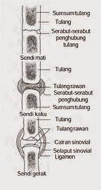 Skema macam-macam hubungan antar tulang