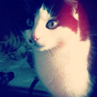 Koleksi Kucing Comel