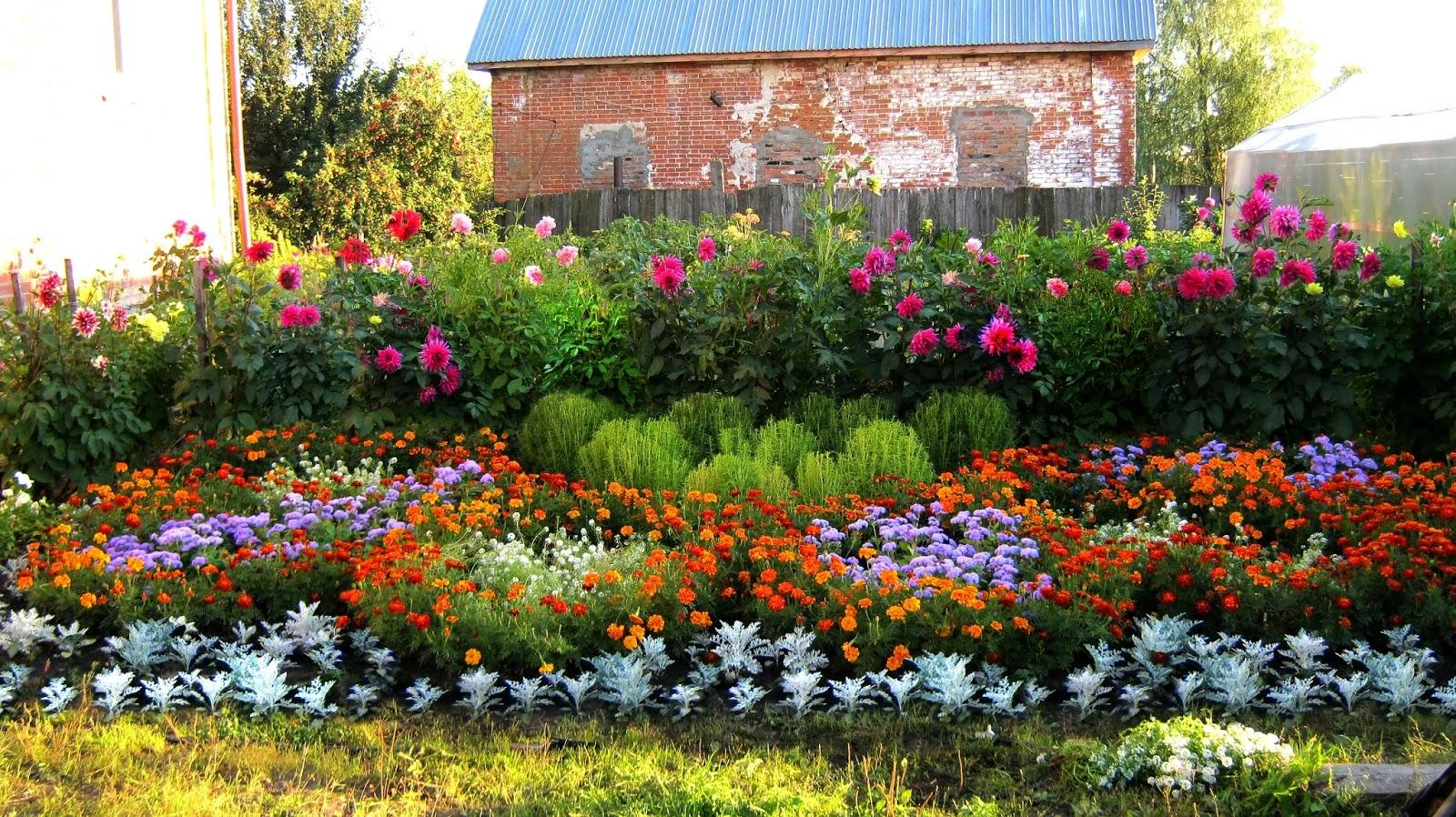 Картинки по запросу Красивые и неприхотливые растения для начинающего садовода