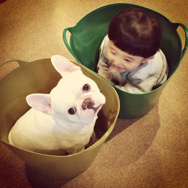 Adorable Animal Friendship