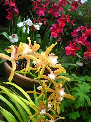 Moje oblíbené květiny