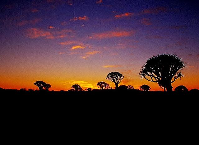 Aloe Forest Keetmanshoop