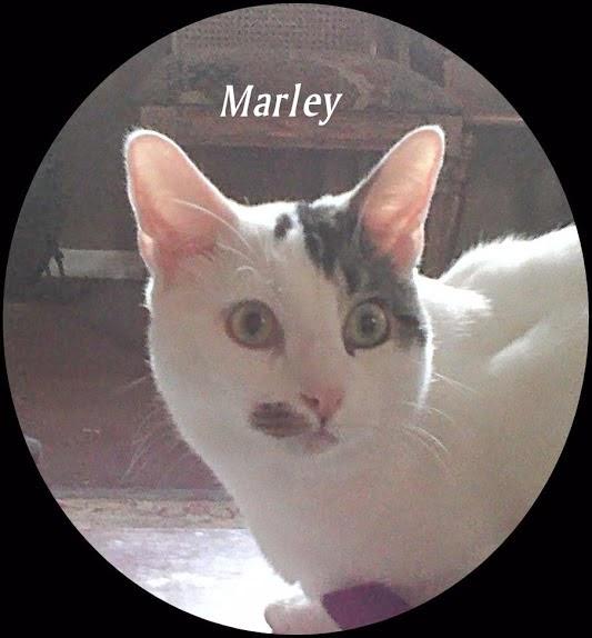 Marley aka Marty