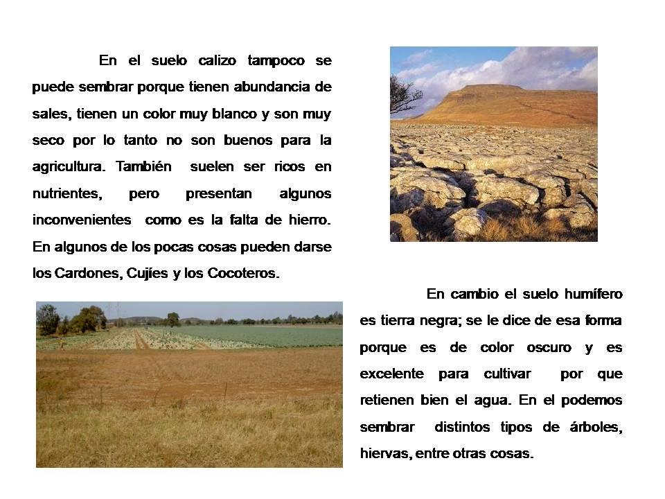 Tipos de suelos tipos de suelos for Suelos y tipos de suelos