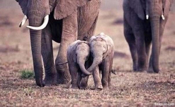Imágenes tiernas de elefantes ~ Imagenes lindas de amor