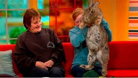 gambar hewan - foto kelinci terbesar di dunia