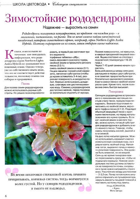 Статья «Зимостойкие рододендроны» в журнале «Цветок»