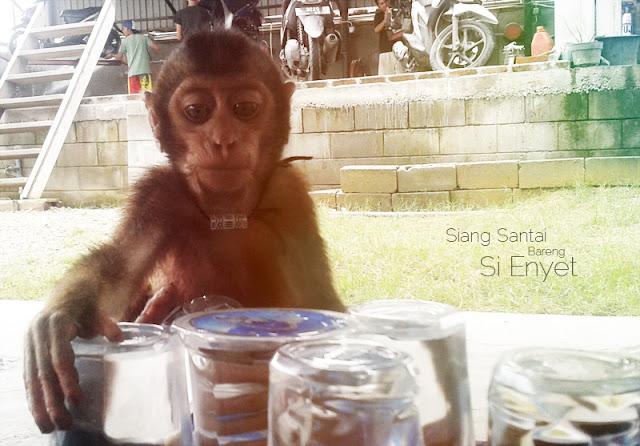 Foto monyet lucu oleh jaka   Jaka Zulham