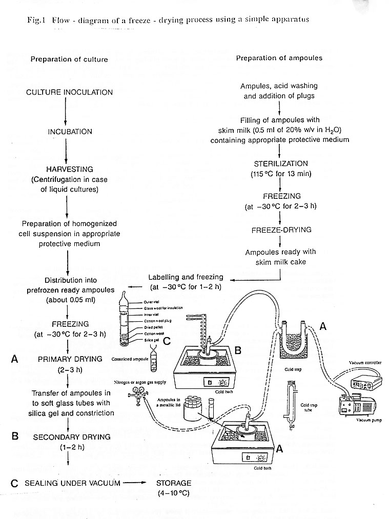 Food Science and Technology: Maintenance and storage of microbial ...