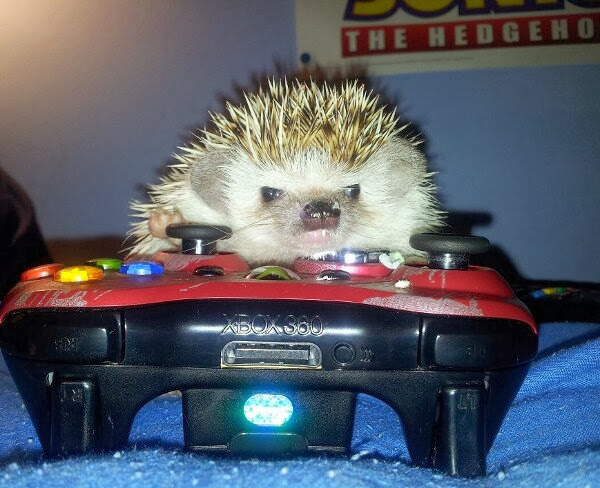 Funny animals of the week - 20 December 2013 (40 pics), hedgehog laying xbox