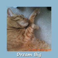Corey The Orange Cat - Dream Big