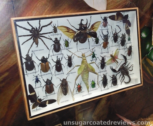 mounted spiders, beetles, and other insects