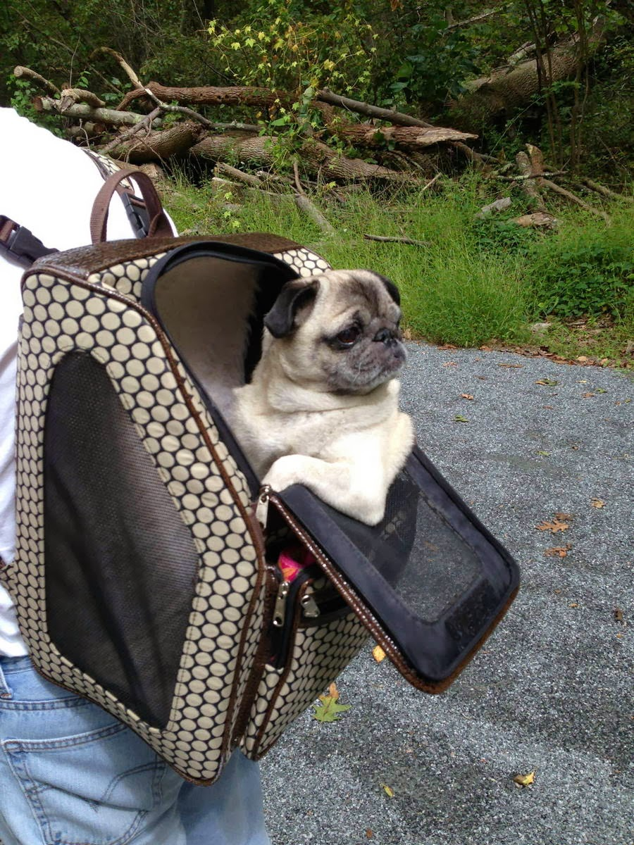 Cute dogs - part 7 (50 pics), dog sits in custom bag