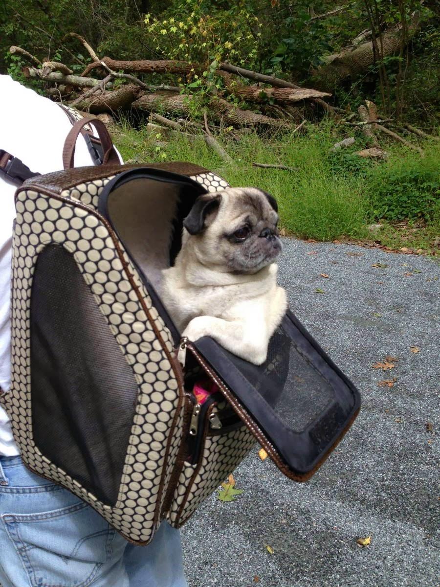 Cute dogs - part 7 (50 pics), dog sits in custom bag
