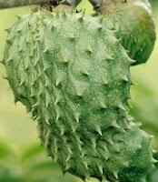 Soursop Fruit Benefits for pregnant women