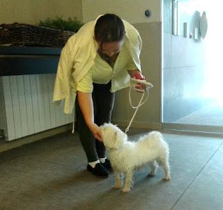 mascotas apartamento tutelado Sabadell