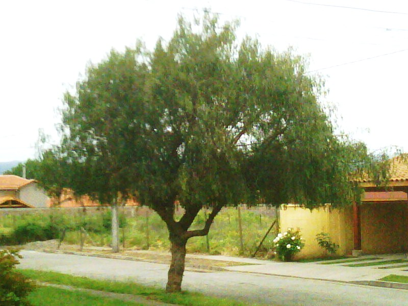 Arboricultura urbana urban arboriculture for Poda de arboles zona sur