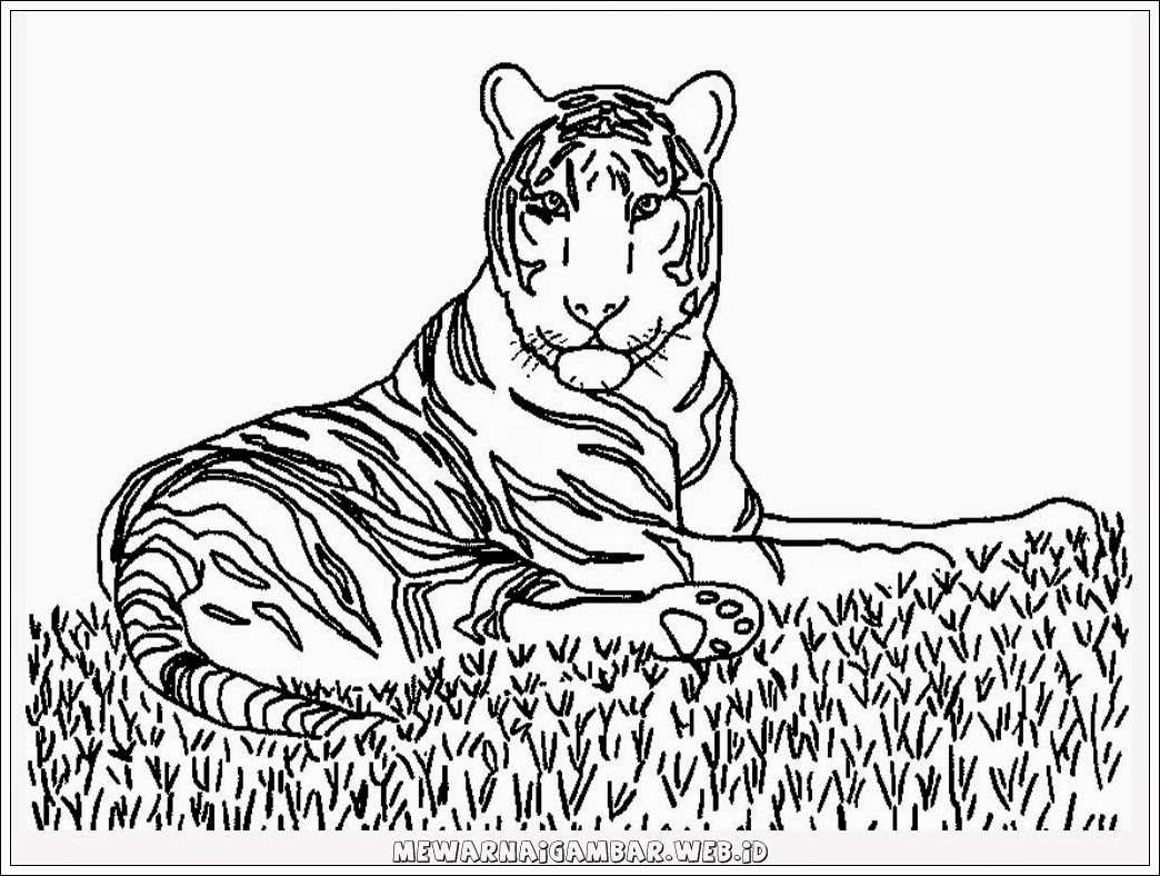 gambar harimau untuk mewarnai