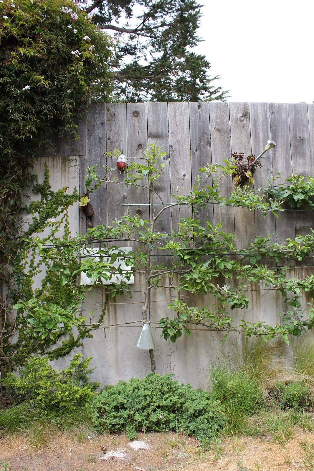 the shingled house apple tree splint