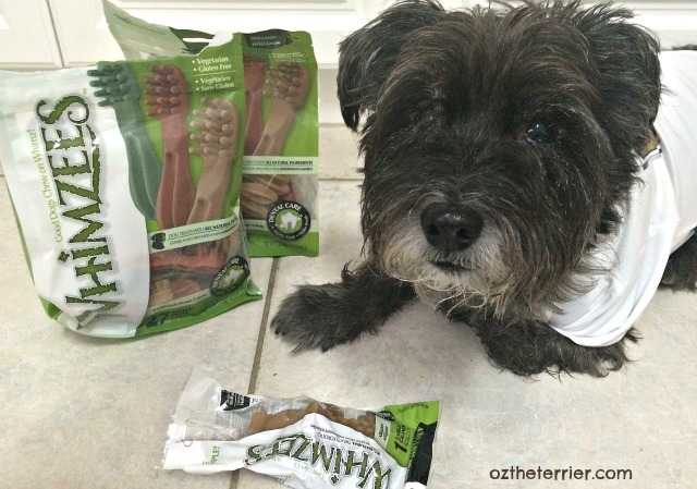 Dr. Oz the Terrier uses Whimzees dental chews for good dog dental health