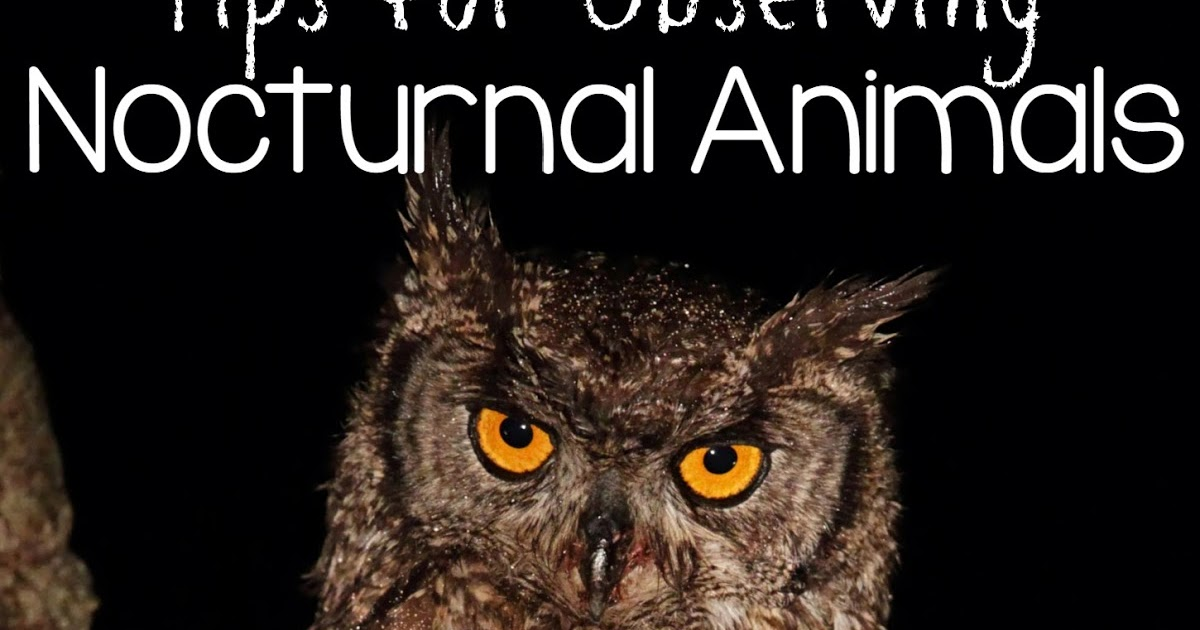 Image of: Preschool Yoyopirateclub Tips For Observing Nocturnal Animals Still Playing School