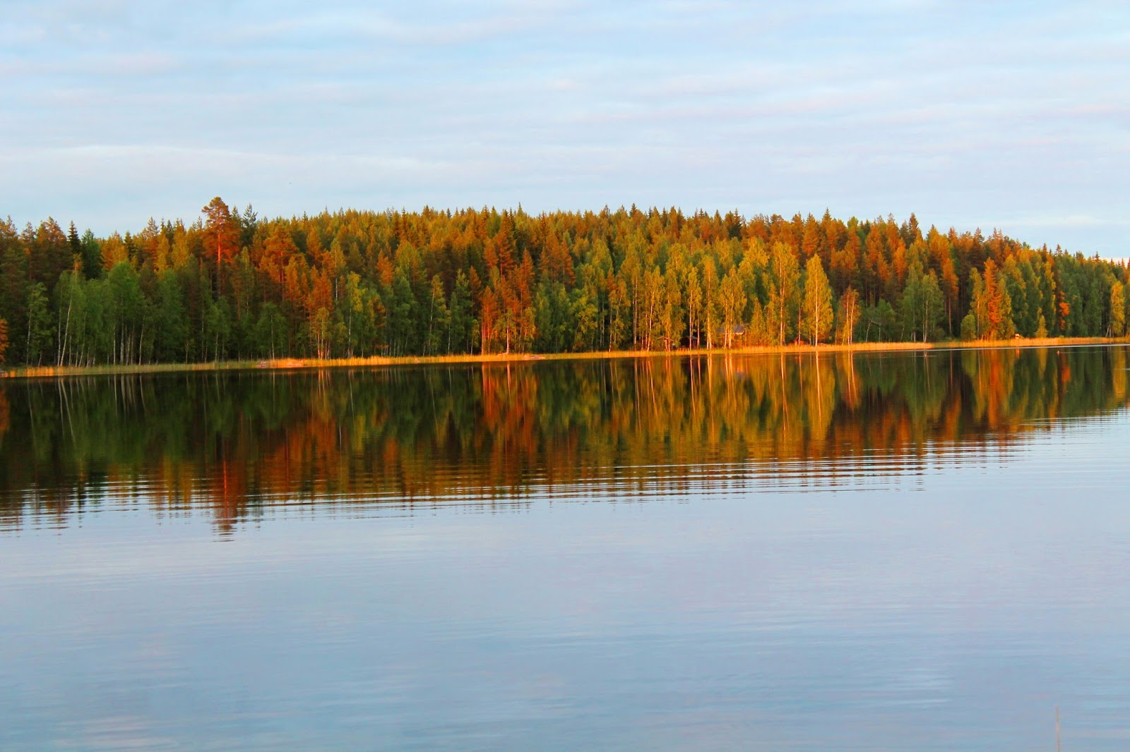 #forest #lake #reflection #red #summer #autumn #fall #finland #visitfinland