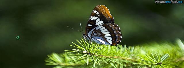 mariposa en un arbol