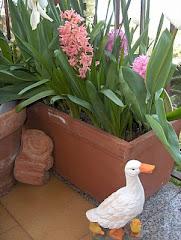 una papera nel mio giardino!