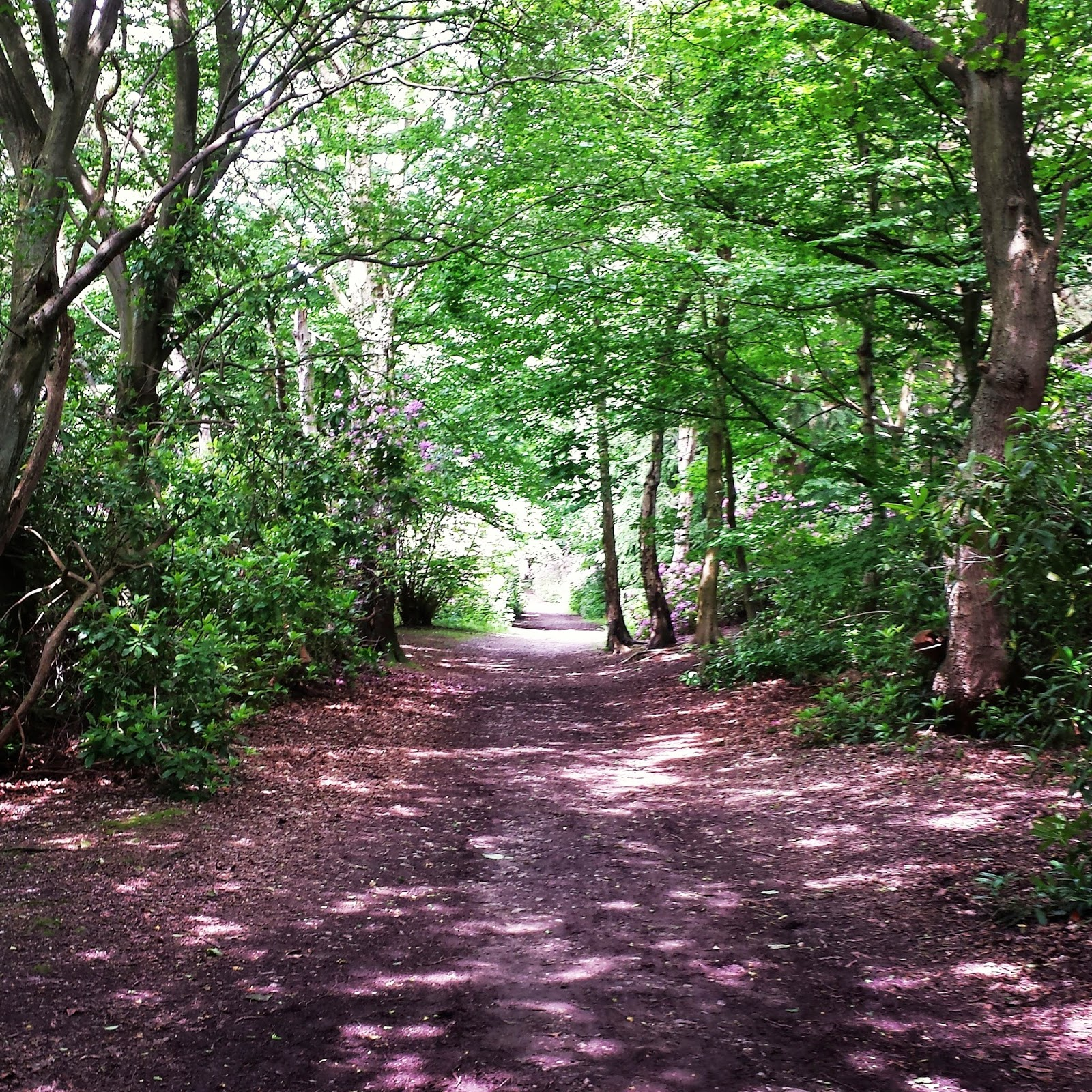 Alton Towers Woodland Walk @ellia_ferro instagram