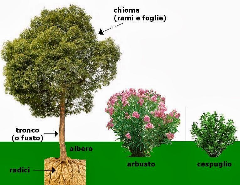 Imparare con la geografia 6 elementi del paesaggio la for Chioma albero