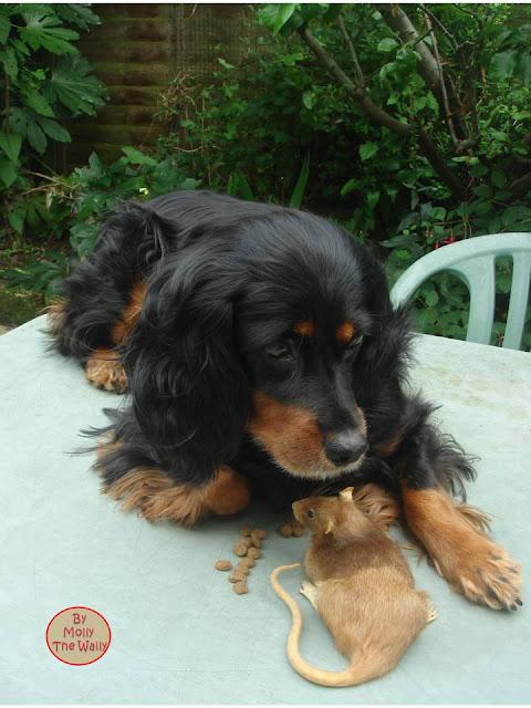 Molly The Wally & Ratty Rat!
