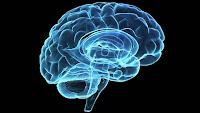 Alteração no cérebro indica pré-disposição ao consumo de maconha
