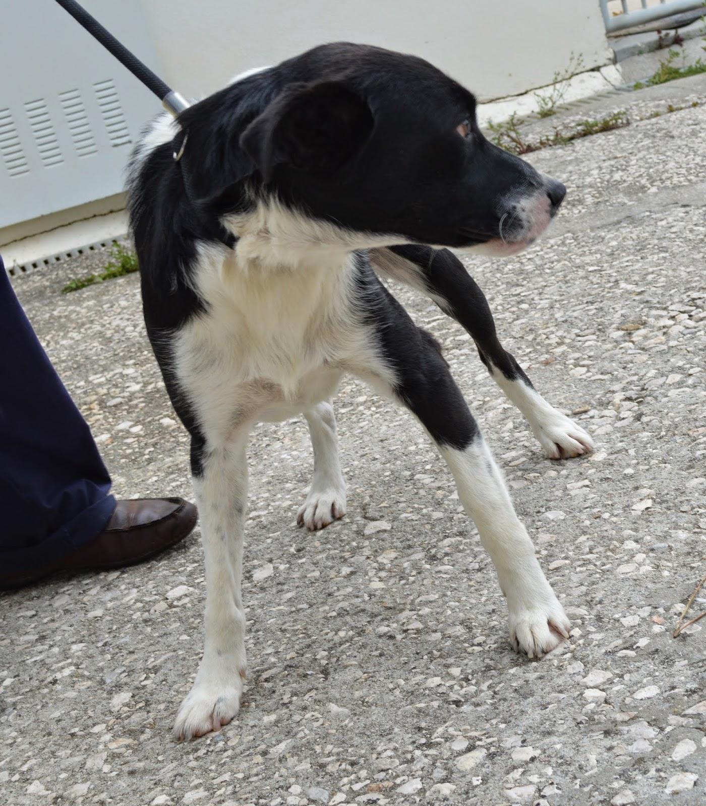Hunde Aus Zentral Portugal : hunde aus zentral portugal adoptieren scotti ~ Lizthompson.info Haus und Dekorationen