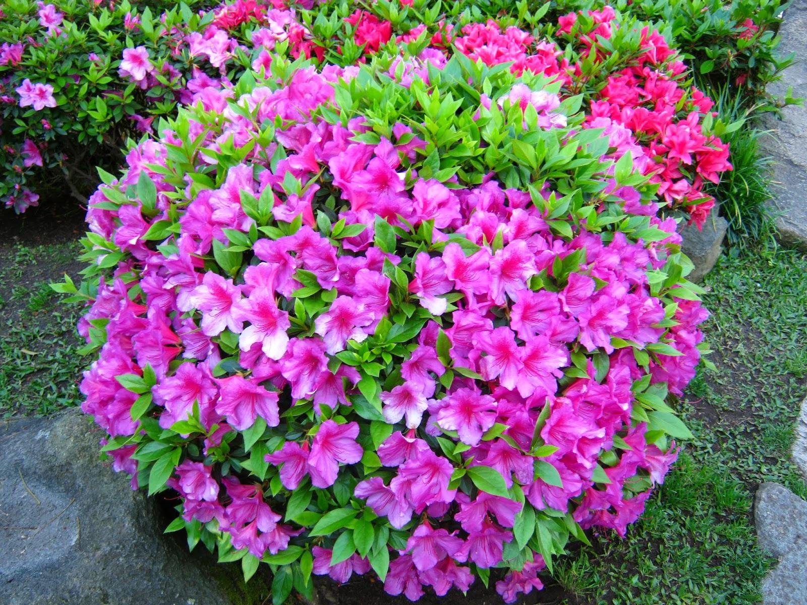 Fotos uruguay jardin japones montevideo for Plantas jardin japones